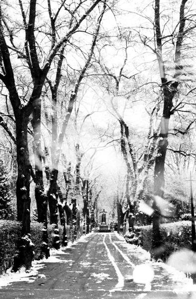 BW_Graveyard Hermannstrasse_14